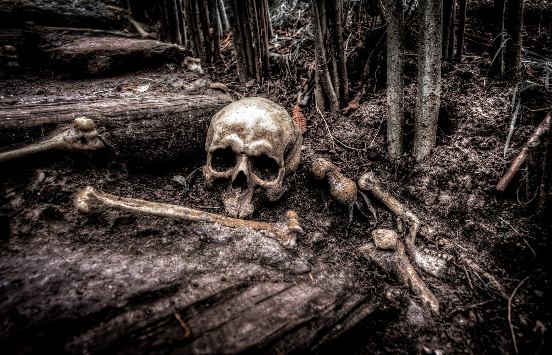 skull in the woods